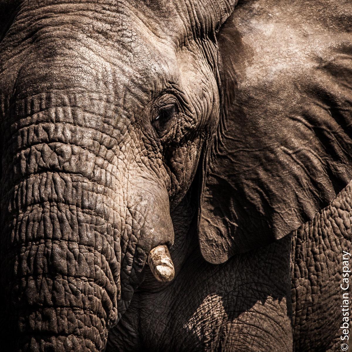 Elefantenportrait