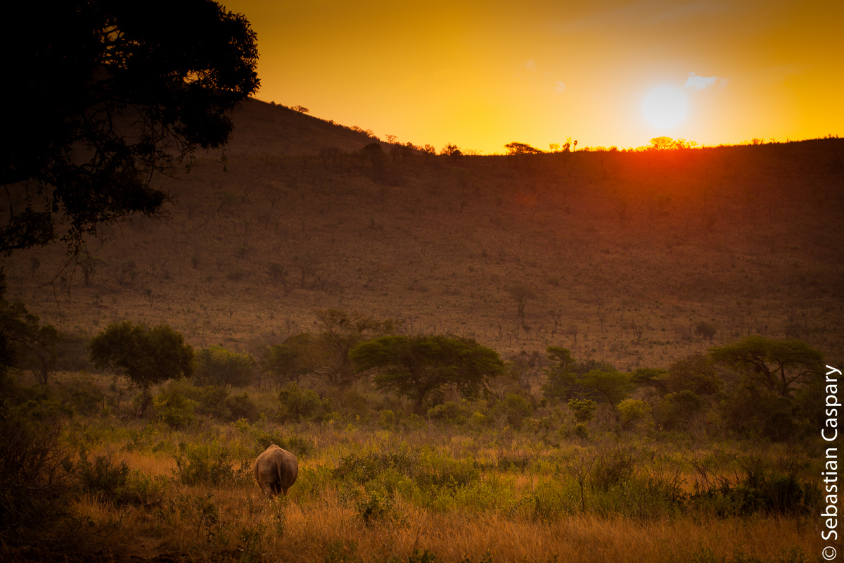 Rhino @ sunset :)