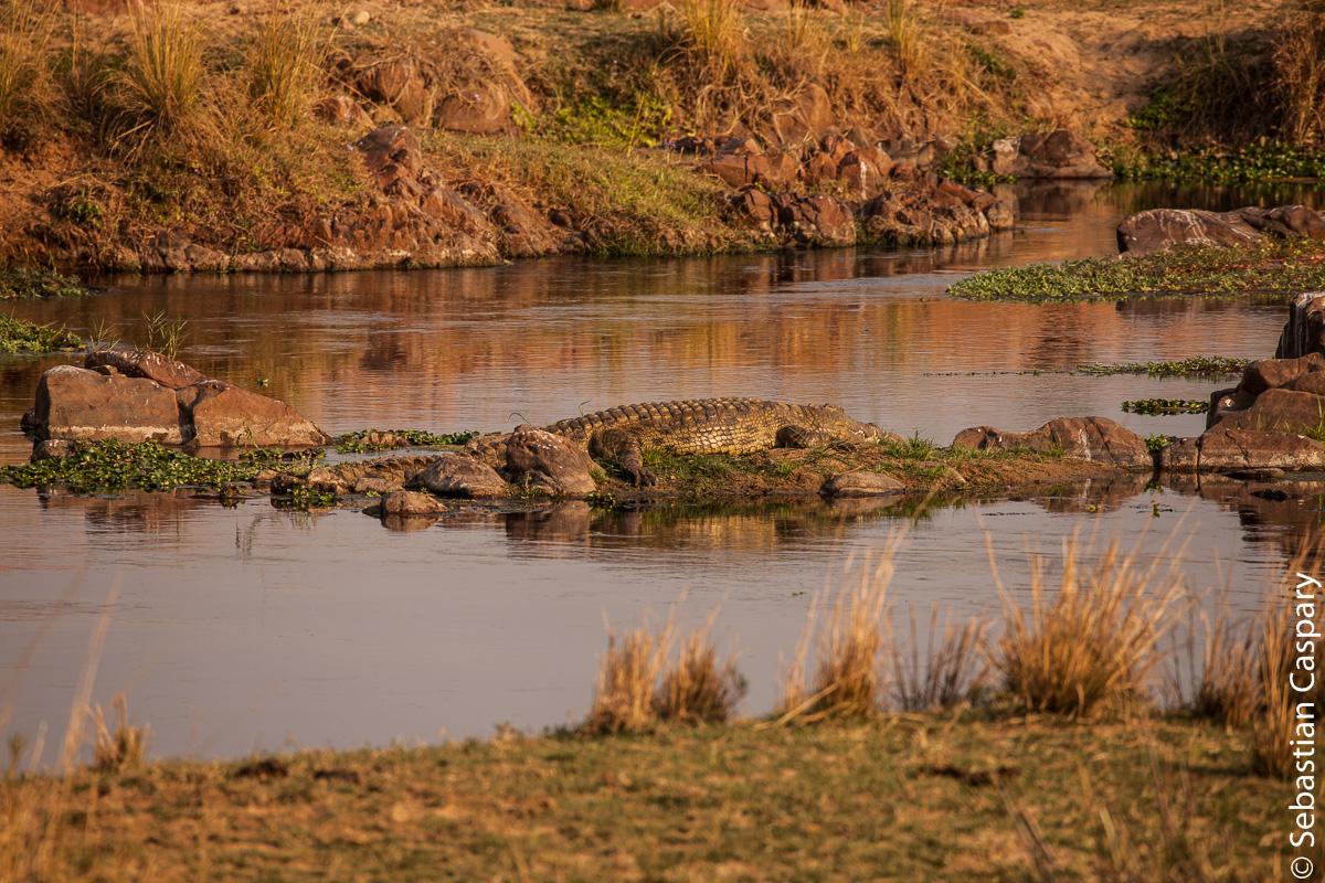 Krokodile sind trotz ihrer Größe ziemlich gut getarnt.
