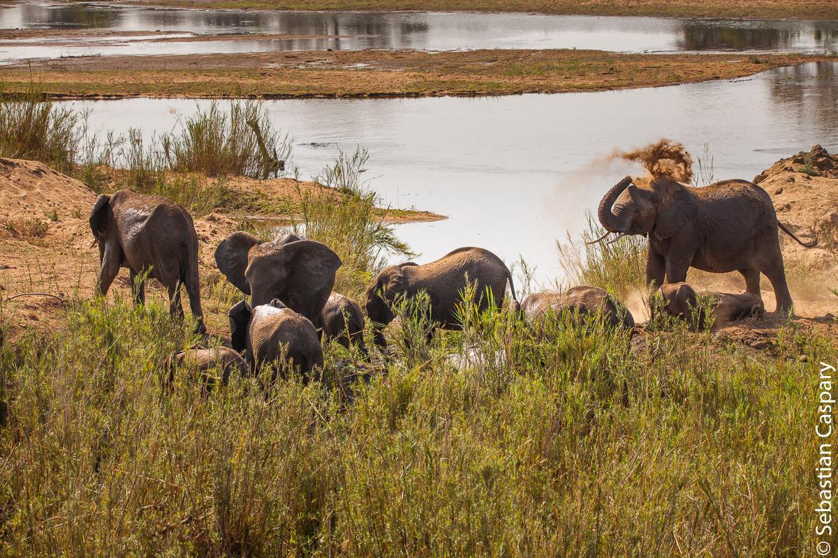 Von der Terrasse des Lower Sabie Restcamps im Krüger Nationalpark ließ sich eine riesige Elefantenherde beobachten.