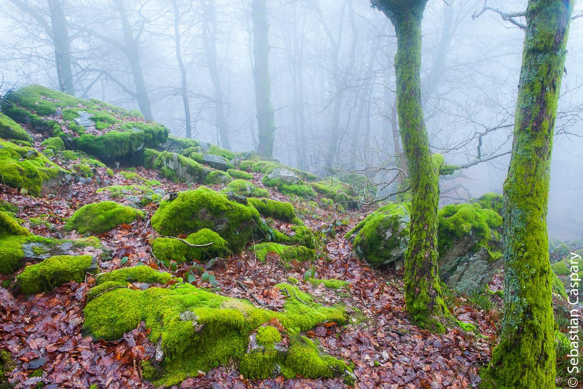 Nebellandschaft im saarländischen Teil des Nationalparks (Dollberge)