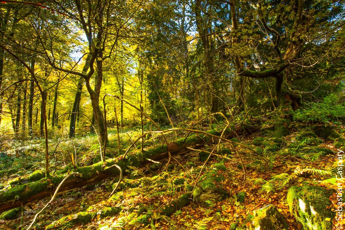 Ein Hauch von Wildnis; Nationalpark (Nähe Wildenburg)