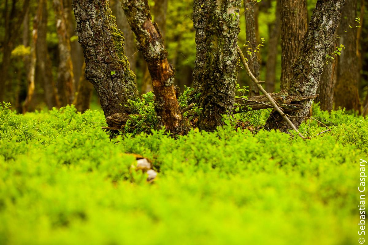 im Wald bei Hattgenstein