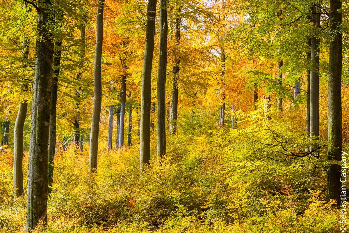 Farbenpracht im Herbst; bei Börfink