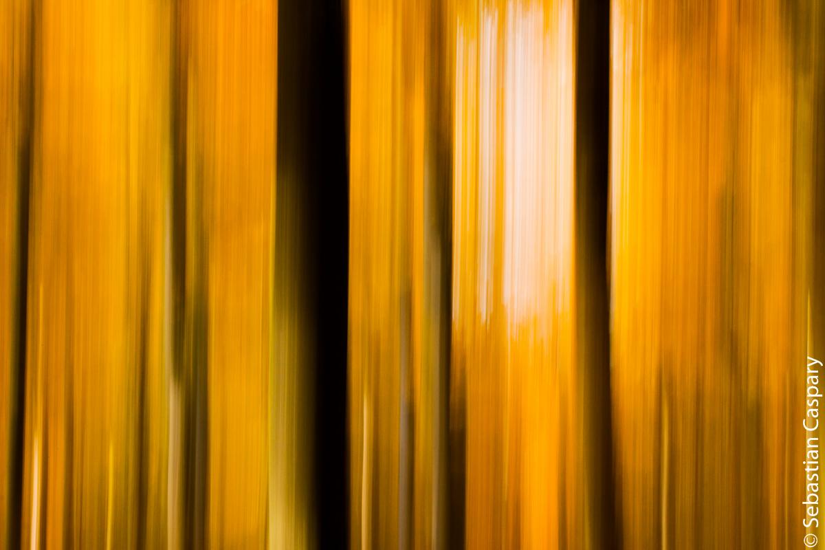 Herbstlicher Buchwald abstrakt